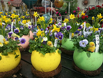 pansies and daffodils