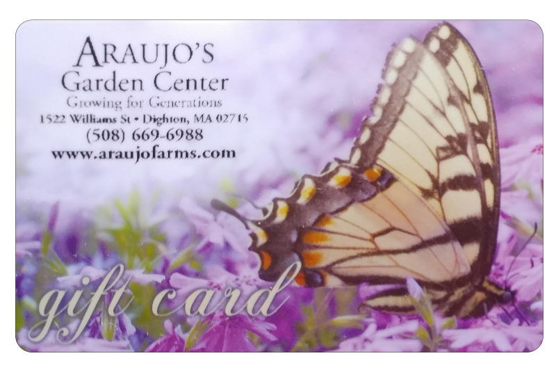 giftcard-butterfly2